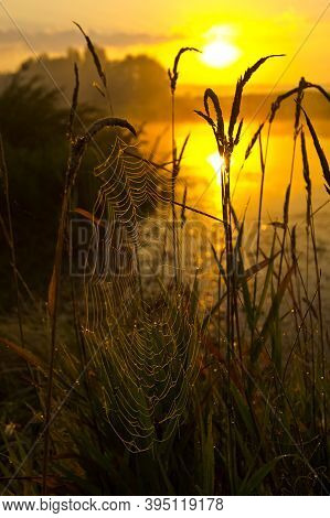 Lake At Sunset, Coastal Grass And Trees. The Light Of The Sunset Above The Water.