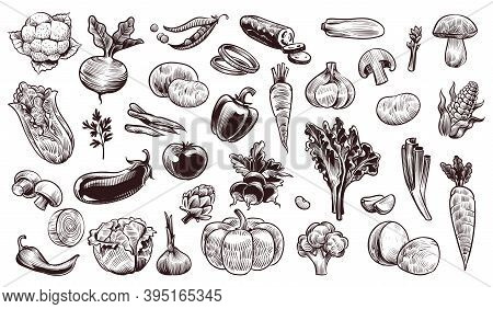 Vegetables Sketch. Hand Drawn Various Farming Harvest Food Vintage Collection, Organic Carrots Brocc