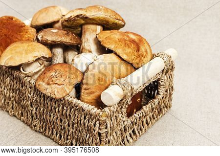 Wild Porcini Mushrooms In Wicker Basket With Copy Space. Autumn Harvest From Forest, Raw Edible Bole