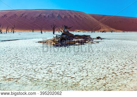 Burnt trees. Orange dunes, burnt trees and ringing silence. Clay plateau in the Namib desert. Namibia. The bottom of the dried lake Sussussflay. The concept of exotic and photo tourism