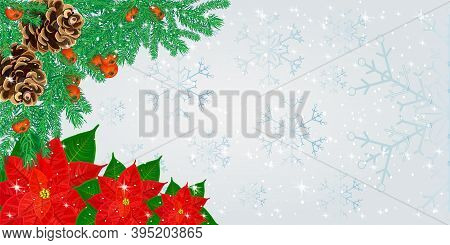 Christmas Border With Fir Branches, Cones, Poinsettia Flowers And Rowan Berries On Snowflakes Backgr
