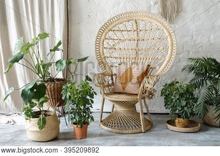 Many Green Houseplants In Flowerpots Standing Near Wicker Armchair With Cushions At Comfortable Livi