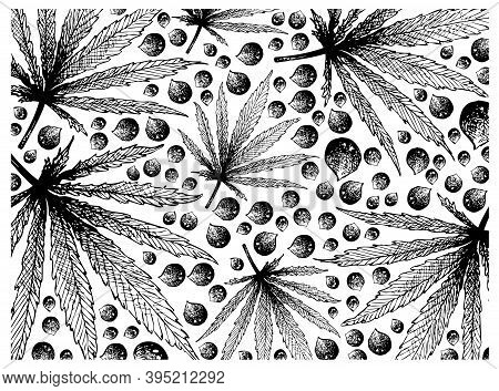 Illustration Wall-paper Of Hand Drawn Sketch Hemp Leaf And Seeds Isolated On White Background.
