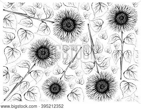 Illustration Wall-paper Of Hand Drawn Sketch Bright And Beautiful Sunflowers In Tight Bundle Isolate