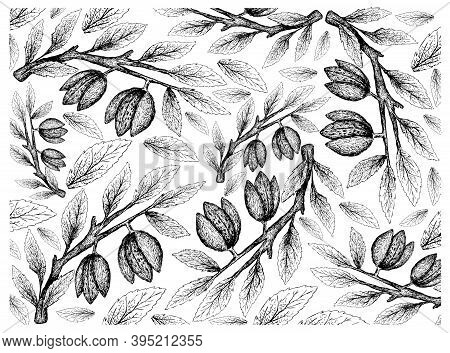 Illustration Wall-paper Of Hand Drawn Sketch Of Almonds On A Tree, Good Source Of Dietary Fiber, Vit