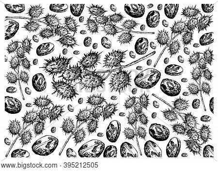 Illustration Wall-paper Of Hand Drawn Sketch Of Castor Beans Or Ricinus Communis Background. The Hig