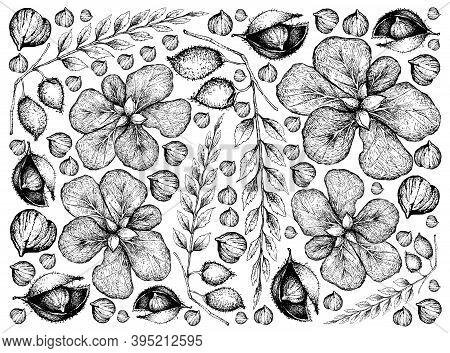 Illustration Wall-paper Background Of Hand Drawn Sketch Of Terminalia Catappa, Malabar Almond Or Sea