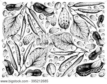 Illustration Wall-paper Of Hand Drawn Sketch Fresh Peanuts Or Groundnut And Green Beans Background,