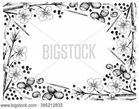 Illustration Frame Of Hand Drawn Sketch Of Canola Seeds And Japanese Chestnuts, Korean Chestnut Or C