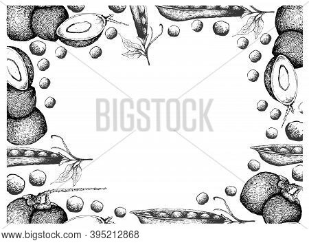 Illustration Frame Of Hand Drawn Sketch Coconut Or Ocos Nucifera Fruits And Snow Peas, Snap Peas Or