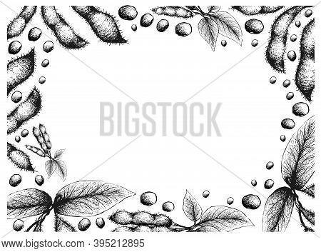 Illustration Frame Of Hand Drawn Sketch Fresh Green Soybean Or Edamame Pods Isolated On White Backgr