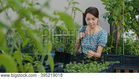 Woman shop flower plant shop