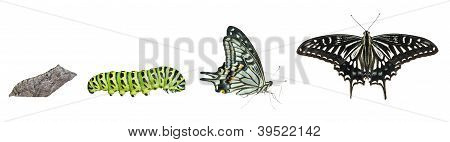 Stages Of Butterfly