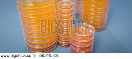Pile of petri dish with growing cultures of microorganisms, fungi and microbes. A Petri dish  ( Petrie dish) known as a Petri plate or cell-culture dish