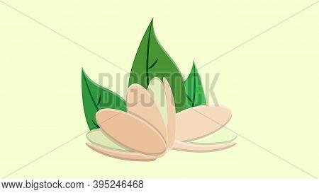 Pistachio Nuts With Leaves. Vector Illustration Realistic Pistachio Kernels.
