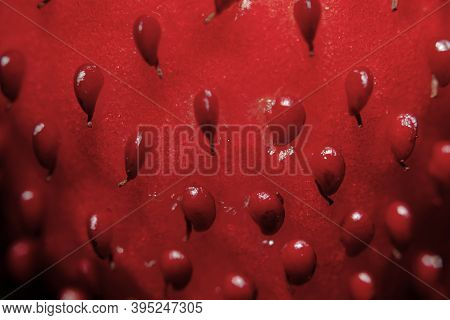 Extreme Close Up Macro Of A Red Strawberry. Strawberry Texture.