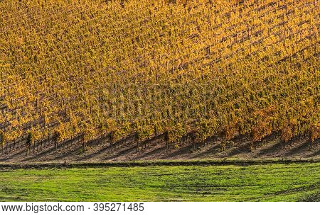 Green Grass And Yellow Vineyard Rows At The Autumn Sunny Day After The Harvesting Completed Minimali