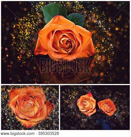Collage Of Orange Roses Lit By Sparkles Glimmering Against A Dark Background