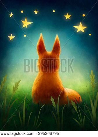 Little cute  red fox staring at stars