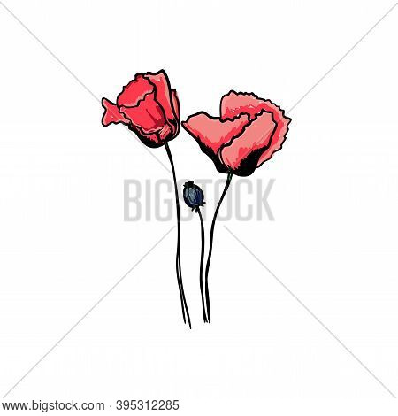 Vector Image Of Buds Of Red Poppies And Poppy Boll. Hand-drawn Wildflower. Botanical Sketch Of Poppi