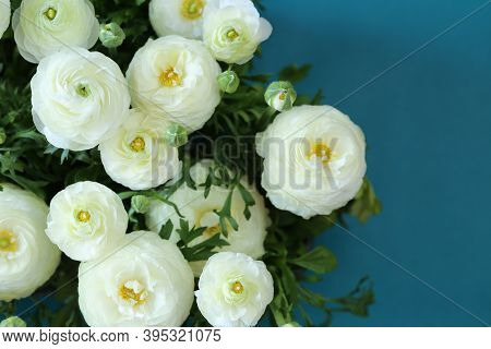 White Ranunculus Flower.buttercup Flowers.white Ranunculus Flowers Set On A Blue Background.floral C