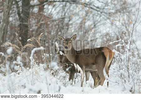 Roe deer snow Nature winter forest trees Nature pet offspring animal Nature background Nature pet doe Nature woods Nature background pet animal Nature background Nature background pet wildlife Nature background mammal Nature animal pet Nature background