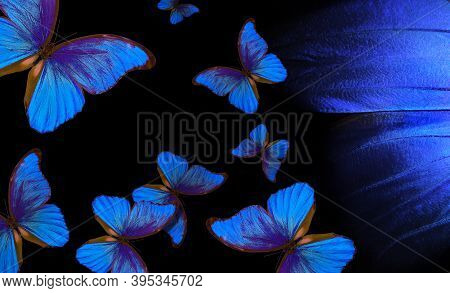 Wings Of A Butterfly Morpho. Flight Of Bright Blue Butterflies Abstract Background. Blue And Black B