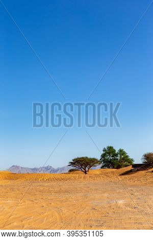 United Arab Emirates Desert Landscape With Wild Ghaf Trees, Tire Tracks On Sand Dunes And Mountains