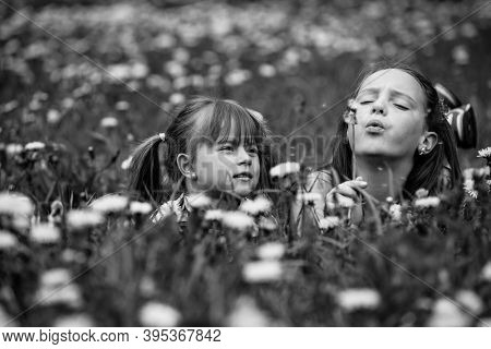 Cute five year old and eleven year old girls blowing dandelion seeds away in the meadow. Black and white photo.
