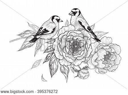 Hand Drawn Goldfinches Sitting On Peony Branch With Flower And Leaves Isolated On White Background.