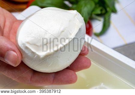 Cheese Maker Holding In Hand Fresh Soft Italian Cheese From Campania, White Balls Of Buffalo Mozzare
