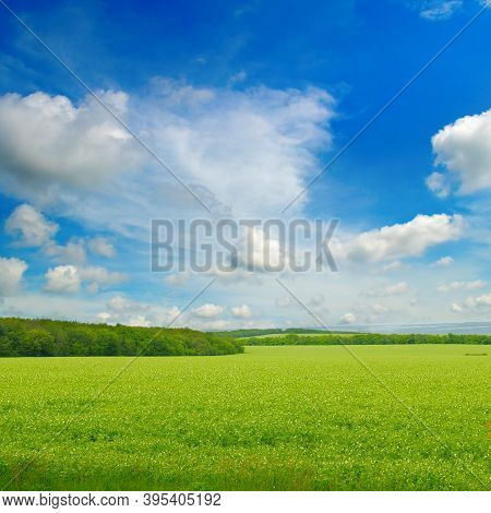 Green Pea Field And Blue Sky With Light Clouds. Agricultural Landscape.