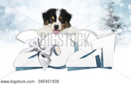 2021 Happy New Year Number Text With Funny Pet Dog Isolated On Blurred Lights Background For Happy N