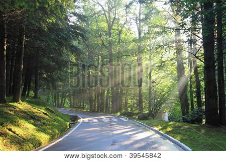 Forest Road In The Early Morning