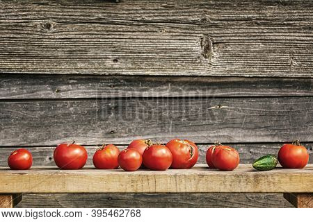 Row Of Tomatoes On A Bench Against Wooden Background