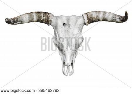 Bull Skull With Horns Over The White Background