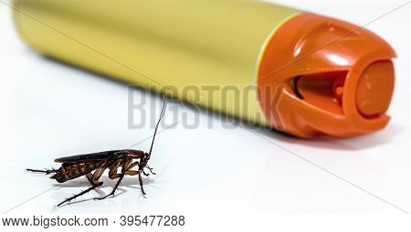 American Cockroach, A Kind Of Cockroach With Wings. Next To A Spray Insecticide. Pest And Insect Con