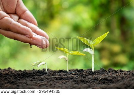 Small Plants Grow On Fertile Soil And Water The Plants As Well As Displaying The Growing Stages Of T