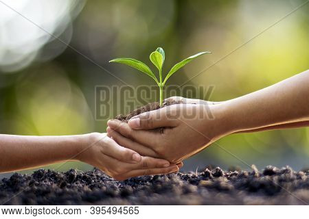 Human Hands Help Plant Seedlings In The Ground, The Concept Of Forest Conservation And Tree Planting