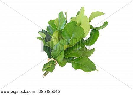 Bunch Of Bergamot Leaves Isolated On White Background With Clipping Path.