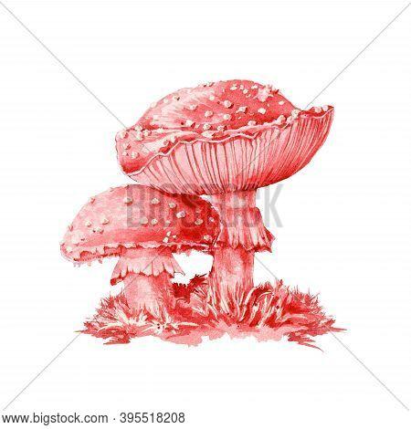 Amanita Muscaria Dangerous Red Mushroom Watercolor Illustration. Close Up Botanical Toxic Couple Toa