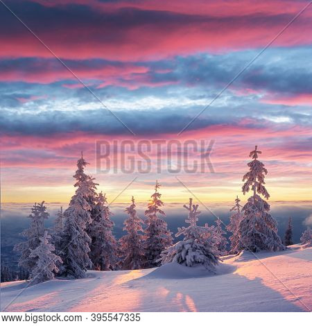 Fantastic winter landscape in snowy mountains glowing by morning sunlight. Dramatic wintry scene with frozen snowy trees at sunrise. Christmas holiday background