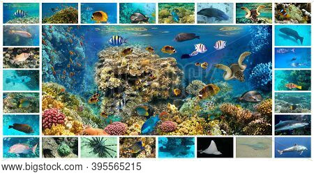 The Collage Of Underwater Images. Collection Of Tropical Fishes. Catalog From Coral Fish - Picasso T