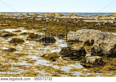 St. Lawrence Seaway And Rocky Beach Of Green Point. Gros Morne National Park, Newfoundland, Canada
