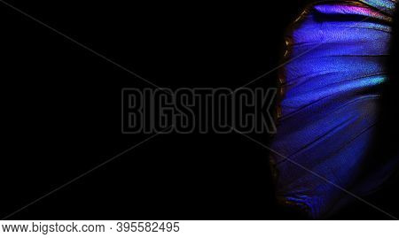 Blue Abstract Pattern. Wings Of A Butterfly Morpho Texture Background. Morpho Butterfly. Selective F