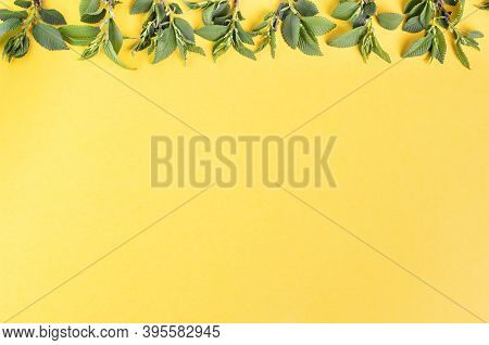 Vegetable Spring Composition. Young Shoots Of An Elm Tree On A Yellow Background. Top View, Flat Lay