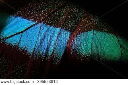 Bright Colorful Wings Of A Tropical Butterfly On Black. Papilio Blumei. Close Up. Butterfly Wings Te