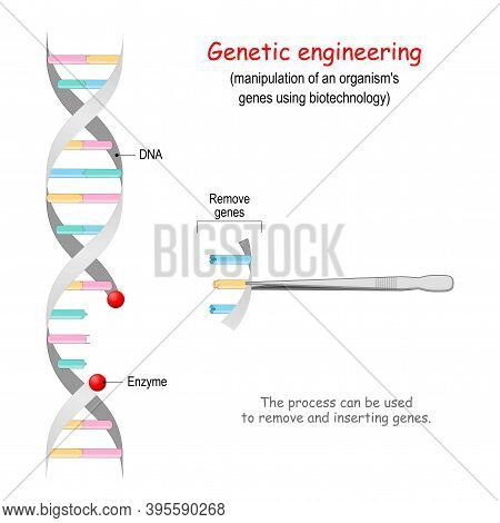 Genetic Engineering. Remove Genes From Dna. Crispr. Process Can Be Used To Inserting And Romove Gene
