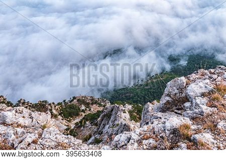 High Stone Rock In The Dense Fog. Green Pines On The Mountainside. Heavy Fog In The Mountains On A C