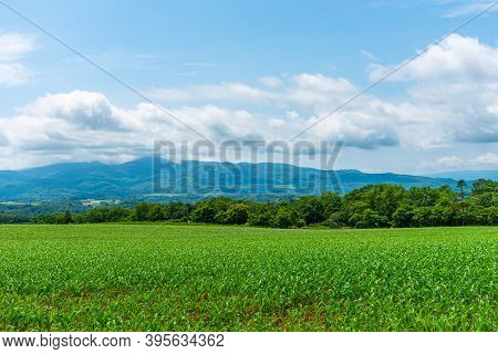 Corn Farmland Field In A Beautiful Springtime Sunny Day. Rural Nature Landscapes, Mountains, Blue Sk